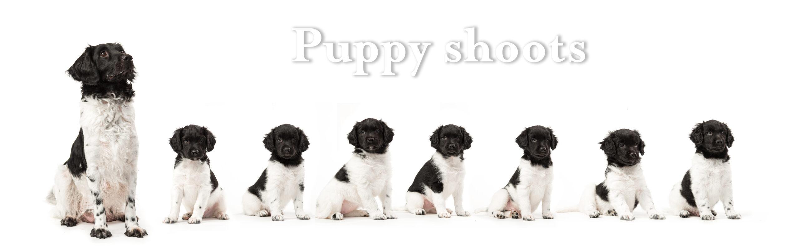 Help! Ik wil een puppy shoot, maar wat nu???